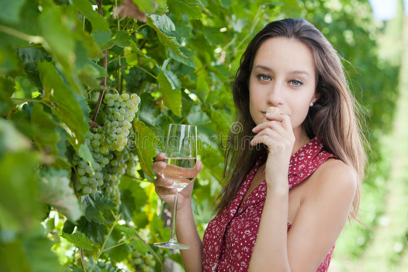 Wine Tasting royalty free stock photography
