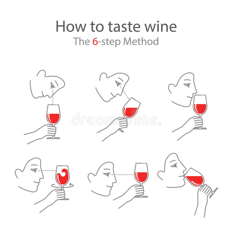 Wine tasting guide for beginners in a modern flat style royalty free illustration