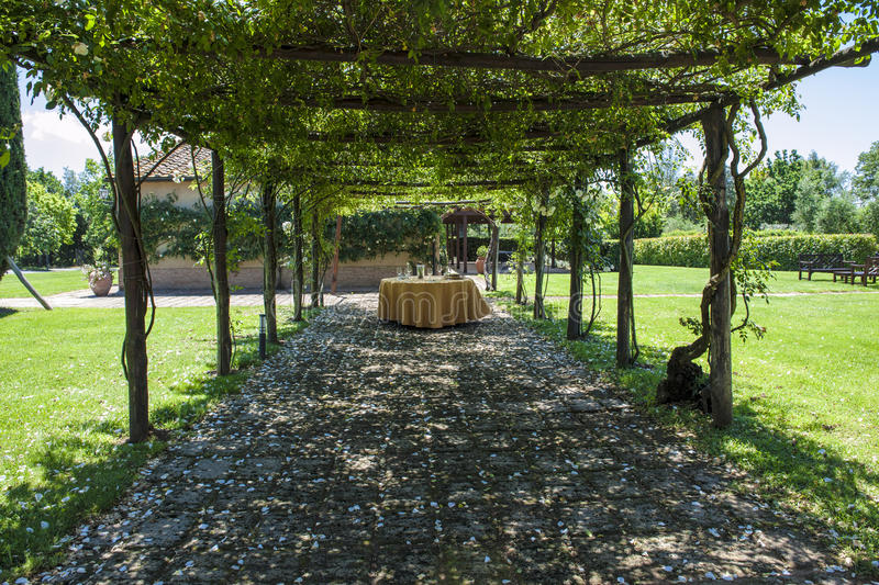 Wine tasting under creeping roses, Tuscany, Italy. Winetasting table in the shadow of creeping roses in the beautiful vineyard of Guado al Tasso inear Bolgheri royalty free stock images