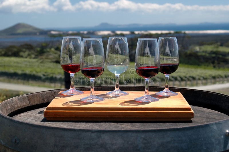 Wine Tasting - Vineyard stock images
