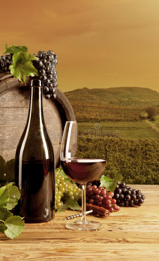 Download Wine in vineyard stock photo. Image of nature, life, food - 34752350