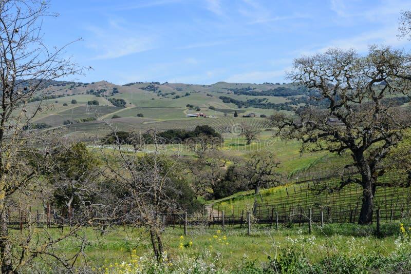 Wine Vineyard in Napa Valley California stock photo