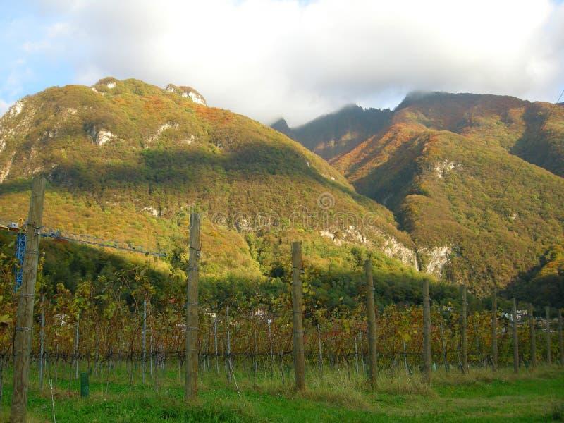 Wine vineyard panorama royalty free stock photo