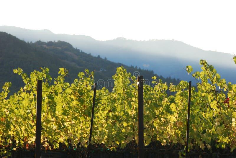 Download Wine vineyard in valley stock image. Image of hill, vineyard - 9757937