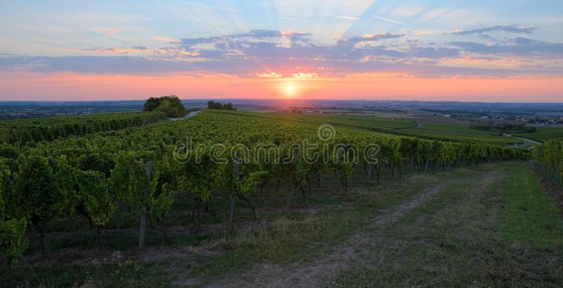 Download Wine-yard stock image. Image of farm, leaves, picturesque - 26598523