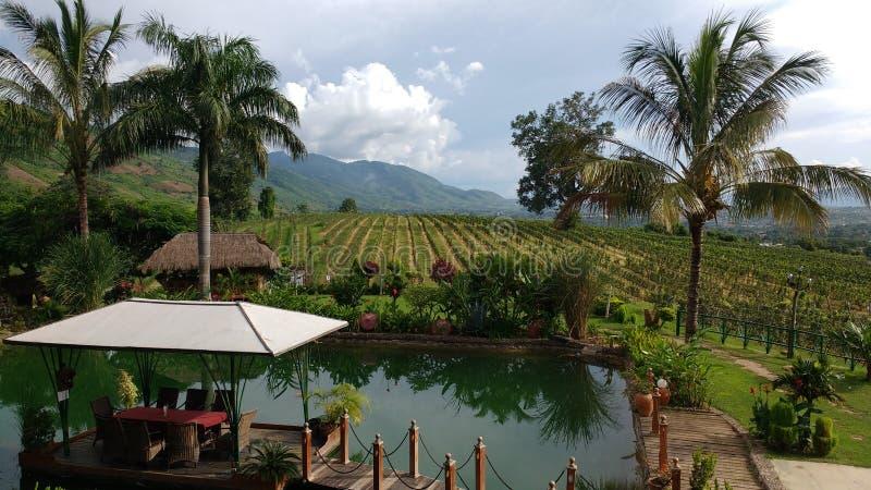 Wine yard Myanmar stock images