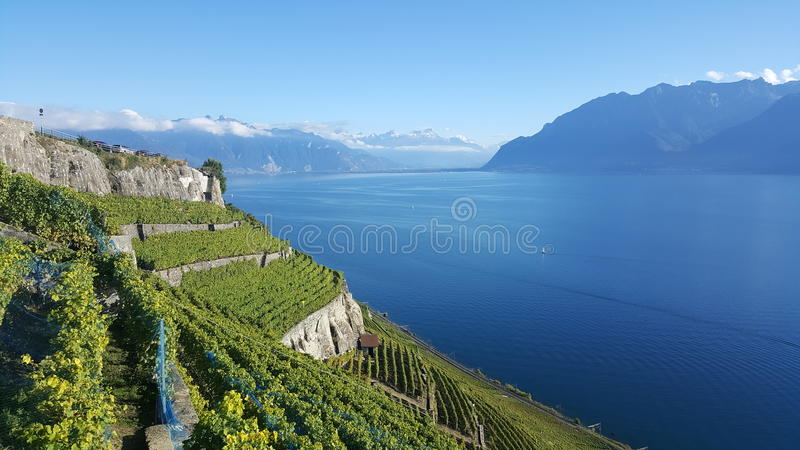 Wine yards royalty free stock images