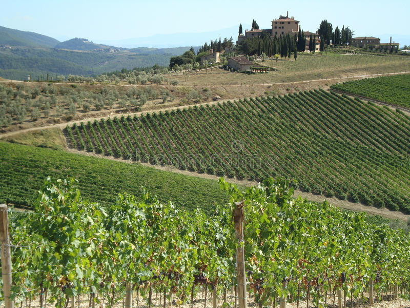 Download Wine-yards of Tuscany stock image. Image of view, green - 14119787
