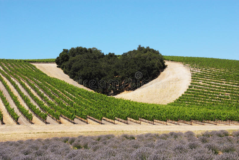 Wineförälskelsehjärta royaltyfri bild