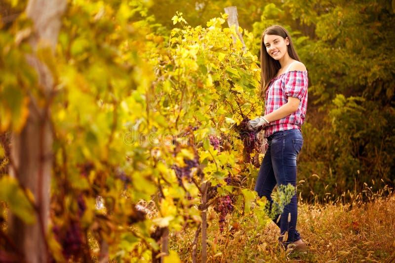 Winegrower в винограднике стоковые изображения