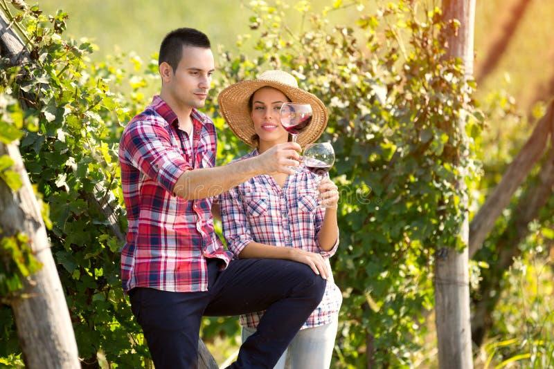 Winegrowers проверяя цвет вина стоковые фотографии rf