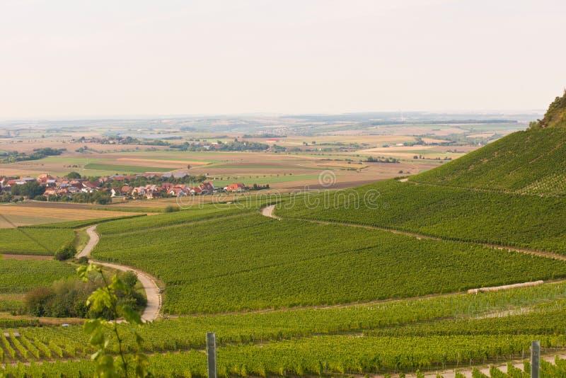 Winegrowing arkivfoto