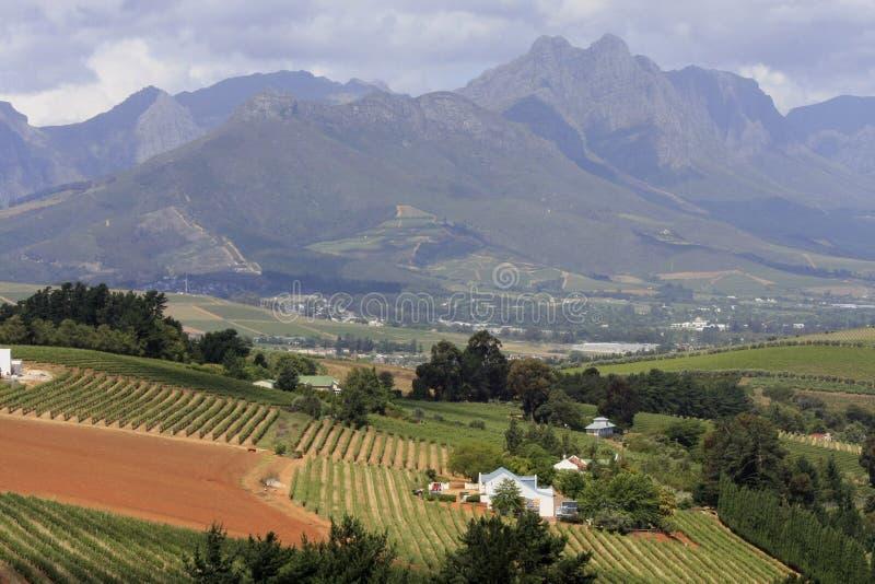 winelands плащи-накидк стоковые изображения