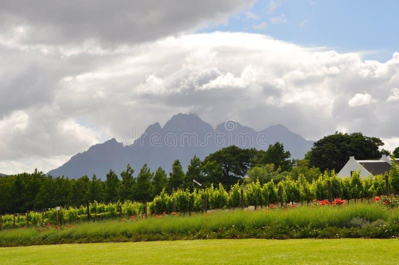 winelands Cape Town África do Sul imagem de stock