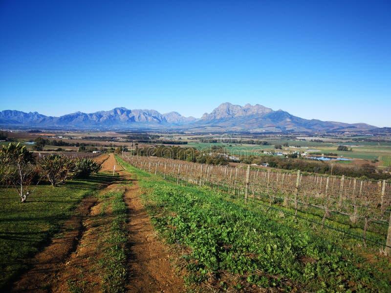 Winelands fotos de archivo libres de regalías