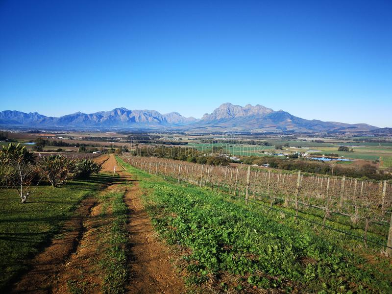 Winelands 免版税库存照片