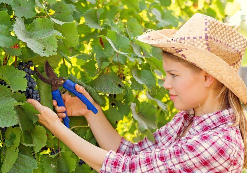 Winemaker imagens de stock royalty free