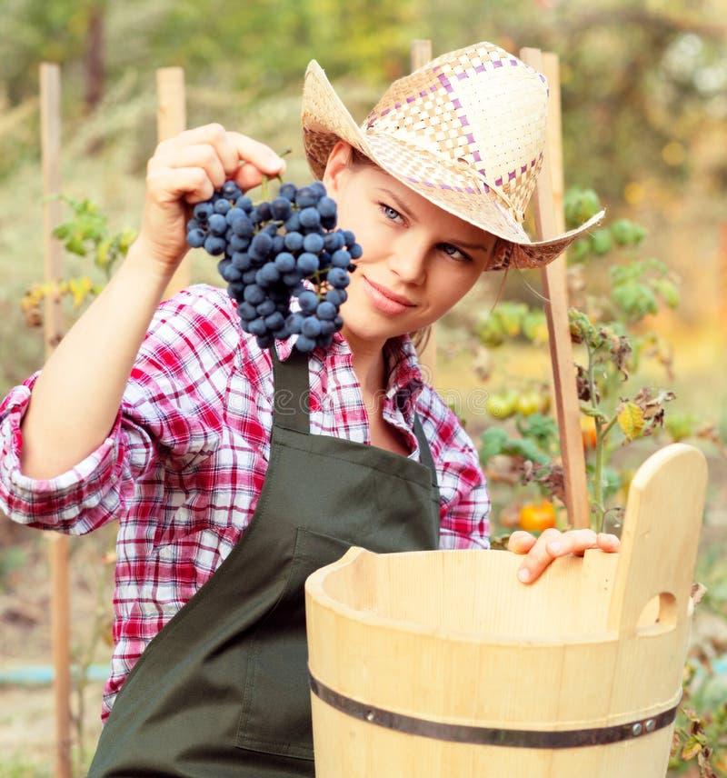 Winemaker foto de stock royalty free