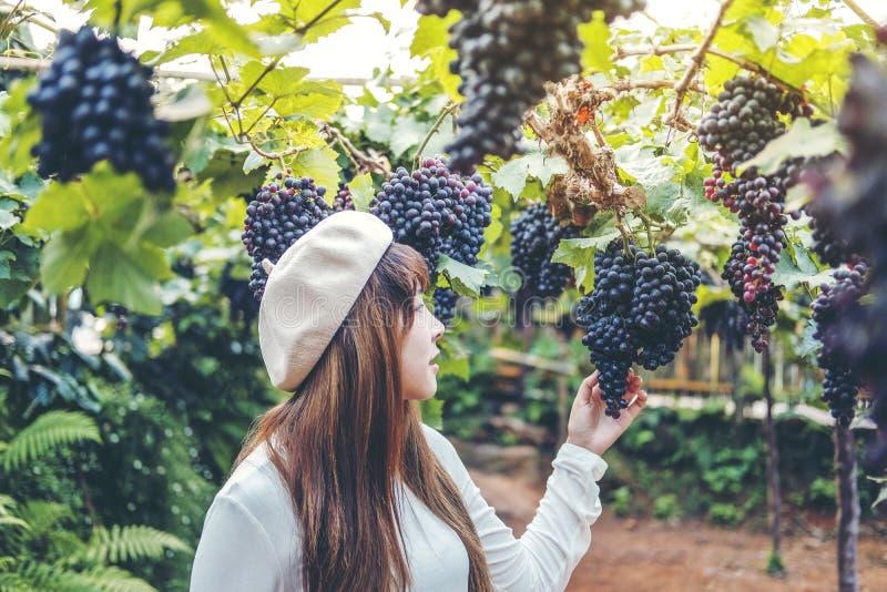 Winemaker asiatique de femme vérifiant des raisins dans le vignoble image stock