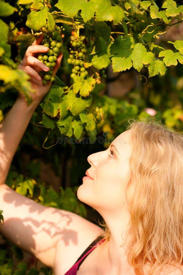 Winemaker che controlla l'uva fotografie stock