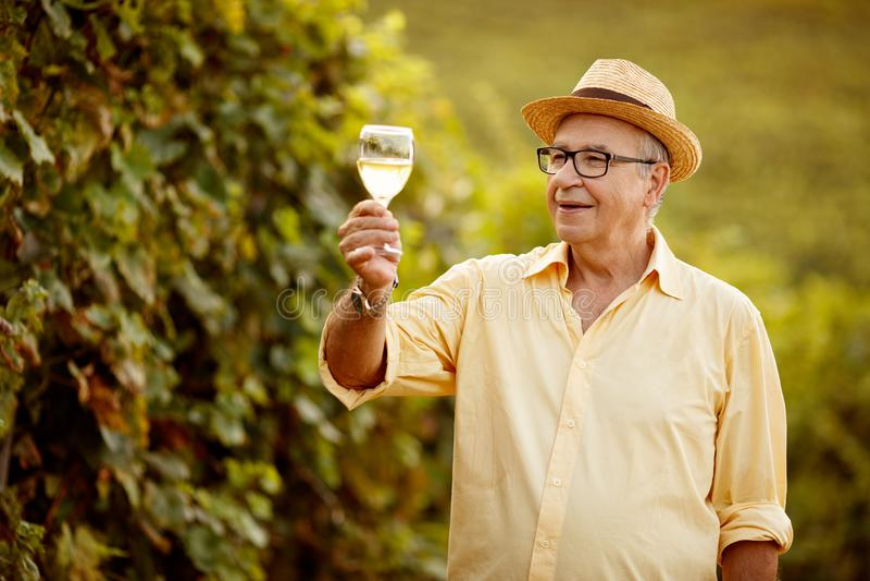 Winemaker de récolte de raisin dans le vignoble photographie stock