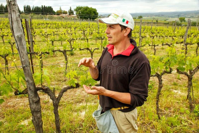 Winemaker se tenant dans son vignoble près de Montalcino, ` Orcia de Val d, photos stock