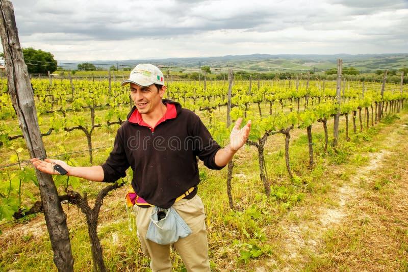 Winemaker se tenant dans son vignoble près de Montalcino, ` Orcia de Val d, image stock