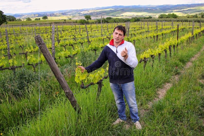 Winemaker se tenant dans son vignoble près de Montalcino, ` Orcia de Val d, images stock