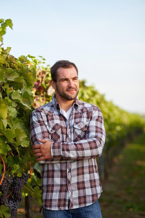 Winemaker w winnicy z rękami krzyżować obraz stock