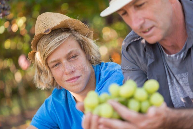 Winemakers far delar med sig av sin erfarenhet av son royaltyfri foto
