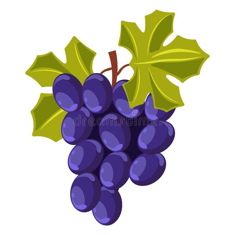 Free Winemaking Grape Bunch Berry Cluster Vine Plantation Harvest Vector Vineyard Wine Royalty Free Stock Photo - 144680365