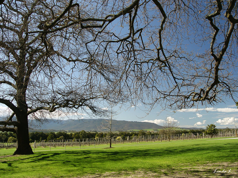 Download Winery stock image. Image of country, clouds, bare, fields - 2049283