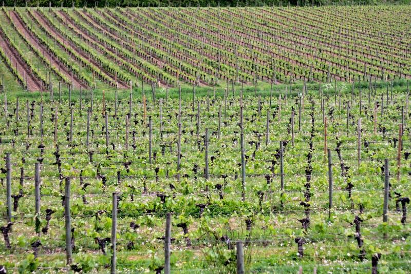 winery photo stock