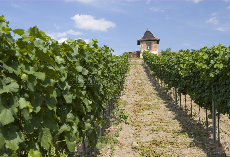Download Winery Stock Photo - Image: 8275000