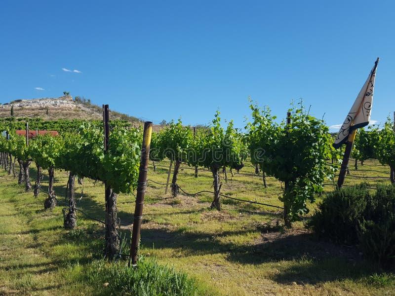 winery imagens de stock royalty free