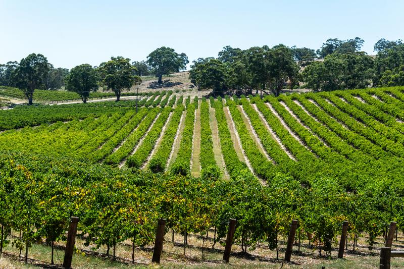 Winery in Barossa Valley in South Australia. Australia stock photography