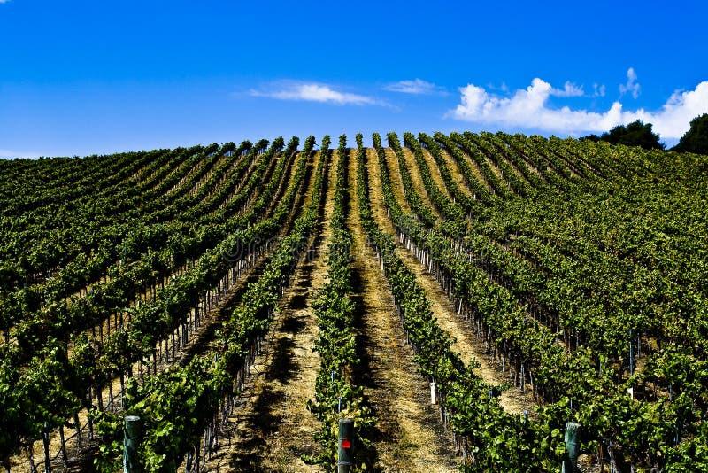 Winery California stock photos