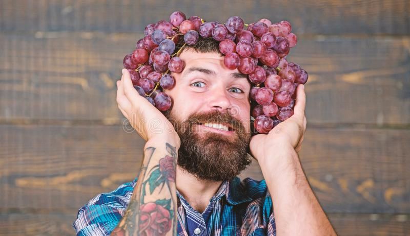 Winery cheerful worker. Farmer with grapes. Winery concept. Man with beard hold bunch of grapes on head wooden royalty free stock photography