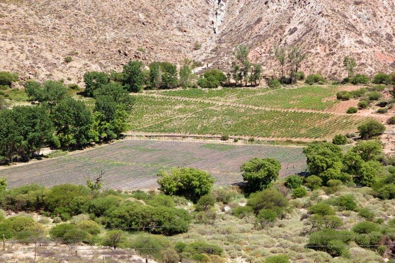 Winery, Finca Tacuil, w dolinie Calchaqui wzdłuż szlaku winiarskiego Argentyny, Argentyna obraz stock