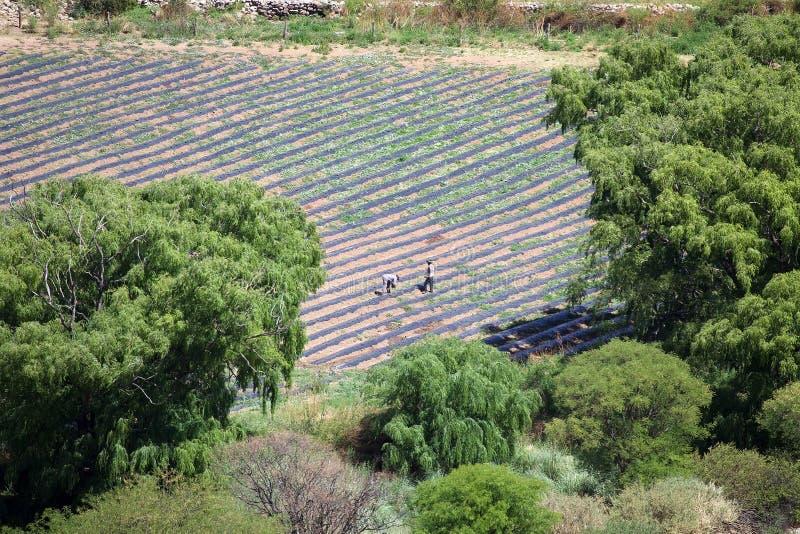 Winery, Finca Tacuil, w dolinie Calchaqui wzdłuż szlaku winiarskiego Argentyny, Argentyna obrazy stock