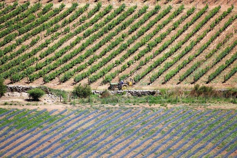 Winery, Finca Tacuil, w dolinie Calchaqui wzdłuż szlaku winiarskiego Argentyny, Argentyna fotografia stock