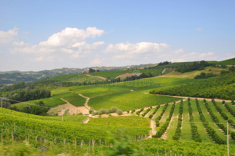 piemonte vineyards Barolo Langhe Alba italy royalty free stock images