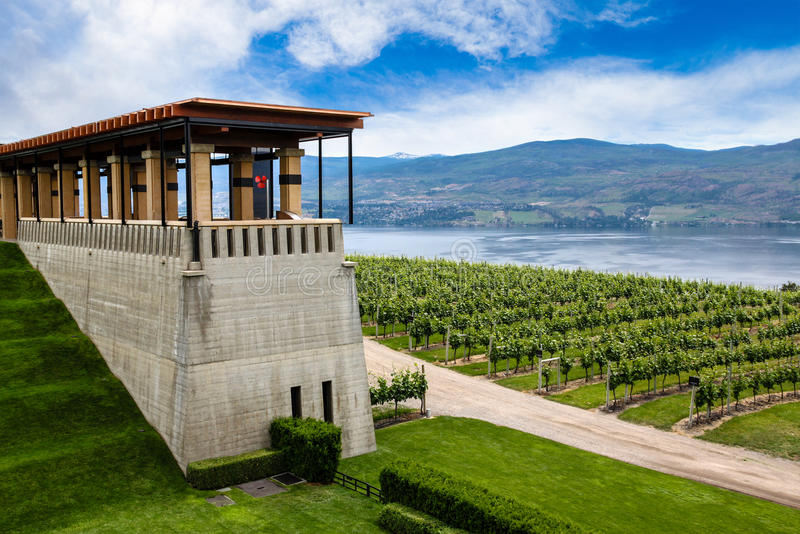 Winery Vineyard in Kelowna, British Columbia royalty free stock photo