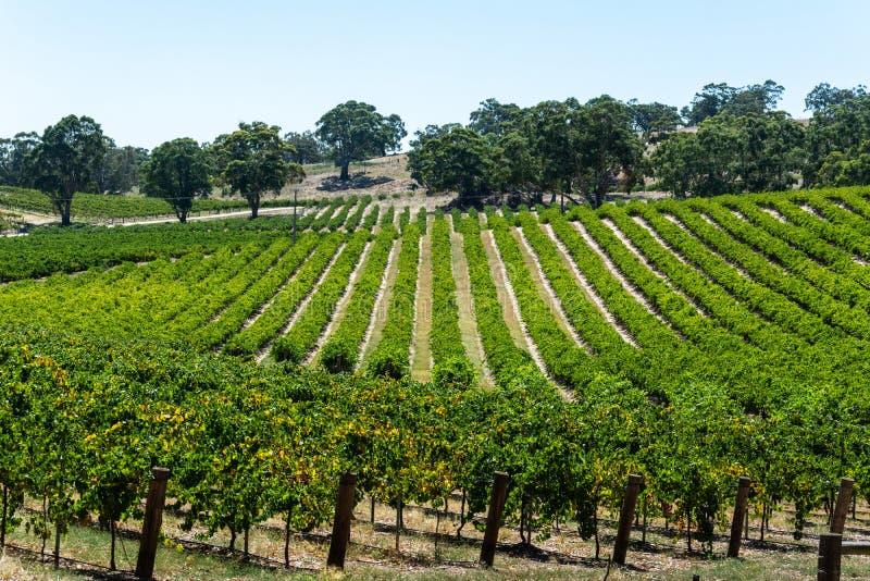 Winery w dolinie barossy w Australii Południowej fotografia stock