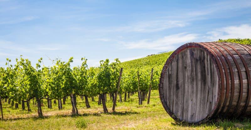Wineyard Тосканы стоковая фотография