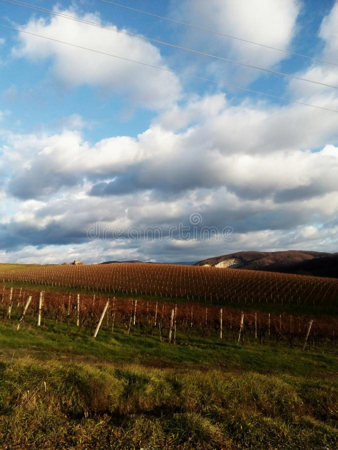 Wineyard royalty-vrije stock afbeelding