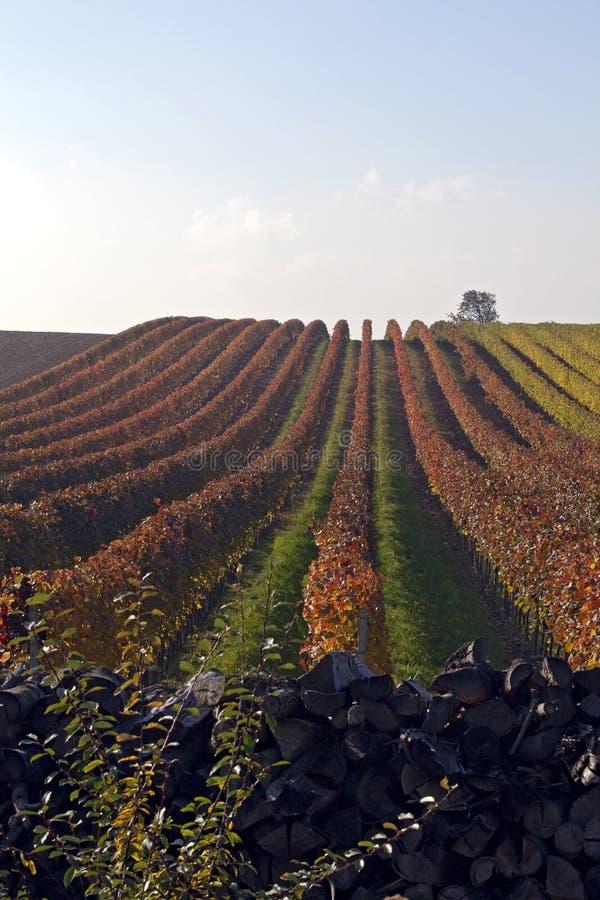 Free Wineyard Royalty Free Stock Image - 15651936