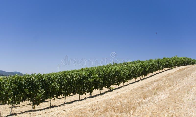 Wineyard royalty-vrije stock foto's