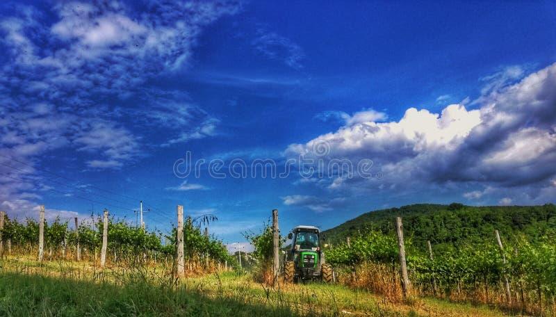 Wineyard stock photo