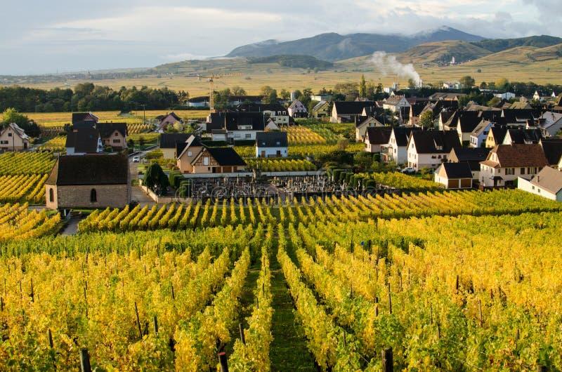 Wineyard de Alsácia imagens de stock